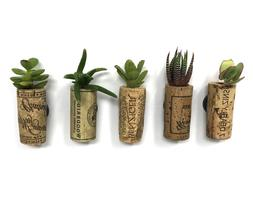Cork Magnet Planters with Succulent Cuttings - Set of 5 - Ma